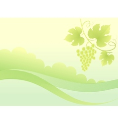 Beautiful green grape vine background vector image