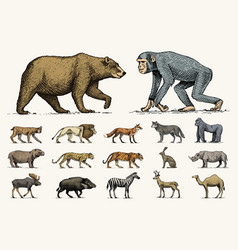 Gorilla moose or eurasian elk camel and deer vector