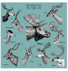 Big set of horn antlers animals moose or elk with vector