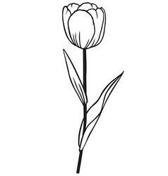 tulip contour vector image