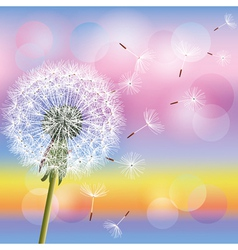 Dandelion on background of sunset vector