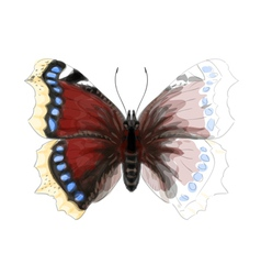 Butterfly Numphalis Antiopa vector image