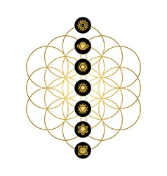 Modern yoga design chakra icons in gold color vector