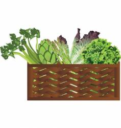 Vegie in basket vector