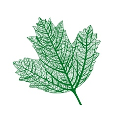 Leaf isolated natural macro leaf vector