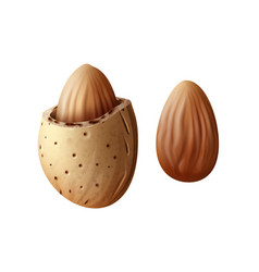 Two almond nuts vector