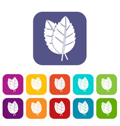 Two basil leaves icons set flat vector