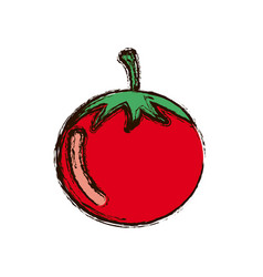 Red vegetable tomato icon vector