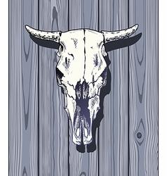 bulls skull vector image