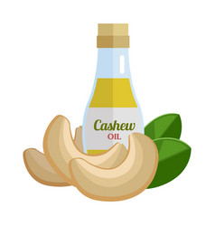 cashew oil in flat design vector image vector image