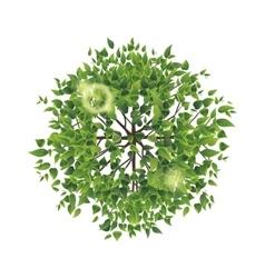 summer tree top view vector image vector image