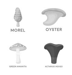 Morel oyster green amanita actarius indigo vector