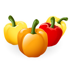 sweet bell pepper vector image