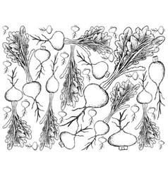 Hand drawn of prairie turnip on white background vector