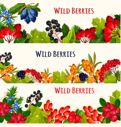 Wild berry banner and fruit border for food design vector