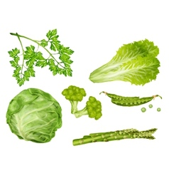 Green vegetables set vector