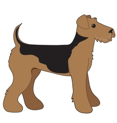 Airedale Terrier vector image vector image