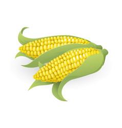 tasty sweetcorn vector image