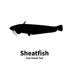 silhouette of fish catfish vector image vector image