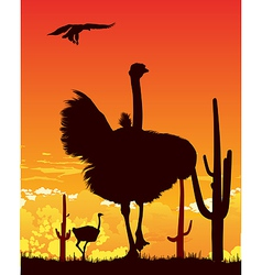 Ostrich wildlife background vector image vector image