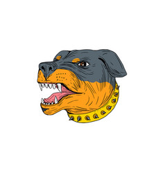Rottweiler guard dog head aggressive drawing vector