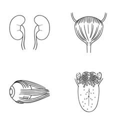 Kidney bladder eyeball tongue human organs set vector
