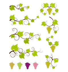 Grape vines design elements set vector image