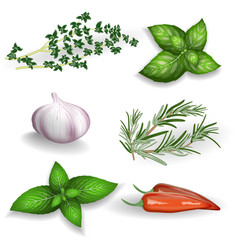 Set of fresh herbs seasonings and spices on a vector