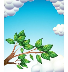 A branch of tree with leaves vector