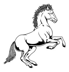 black and white horse vector image