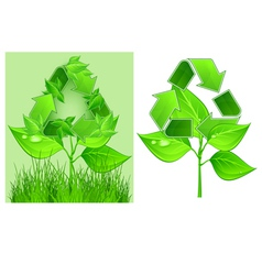 green recycle symbol on plant on white background vector image vector image