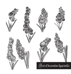 Set of decorative elements hyacinth and leaves vector