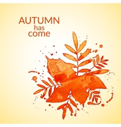 Autumn watercolor rowan leaves and spray vector