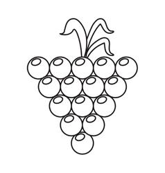 Grape grown organic fruit nature outline vector