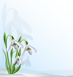 Text background with snowdrops vector image vector image