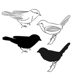 the outline and of the silhouette of the birds vector image