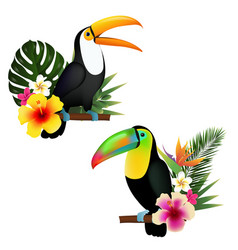 toucan set vector image