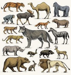 Wild gorilla moose or eurasian elk camel and vector