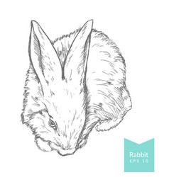 Hand drawn with rabbit vector
