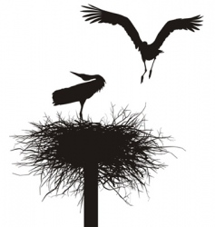 Storks in the nest vector