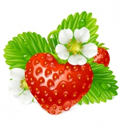 vector strawberry vector image