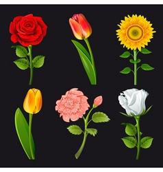 Flower cartoons vector