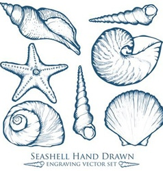 Hand drawn seashell set vector