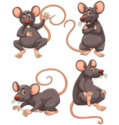 Mouse with gray fur in four actions vector