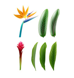 Bird of paradise and red ginger vector