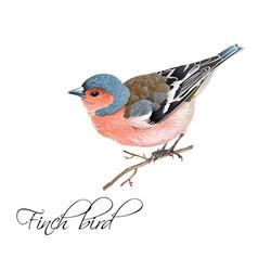 Finch bird vector