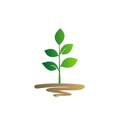 plant seed green botany logo vector image