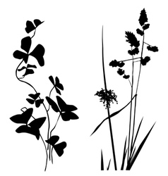 Black white plants silhouettes vector