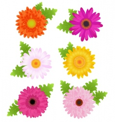 colorful daisies vector image vector image