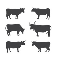 Set of different cows isolated vector
